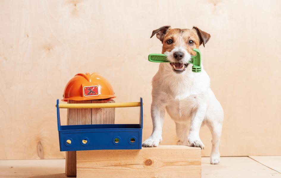 small dog standing nex to toolbox holding a hammer is his jaw