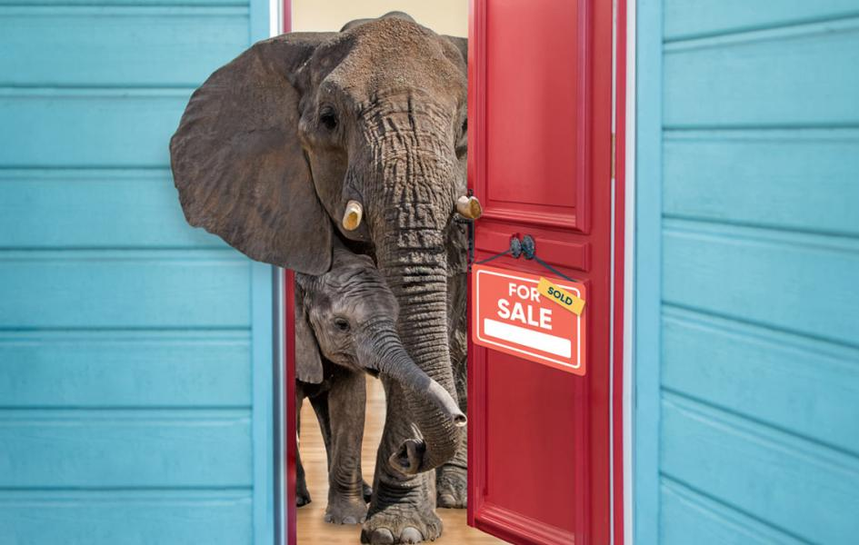 Elephants peeking out of the front door of their home.