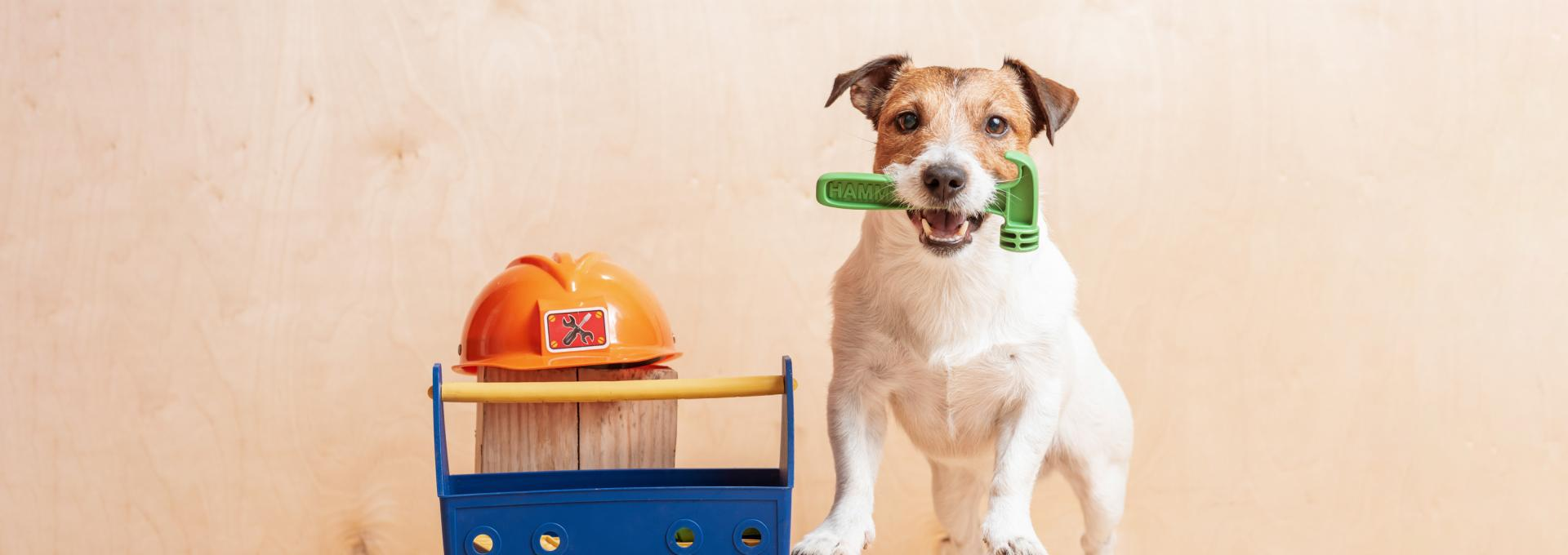 dog next to toolbox holding hammer in its jaw