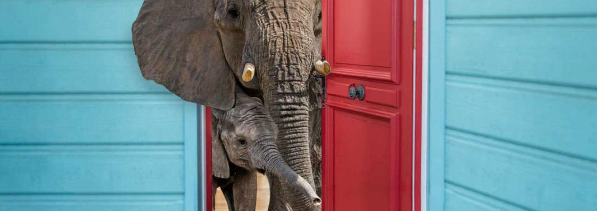 Two elephants are peeking out of the front door of their home.